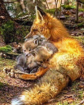 Лисичка мама