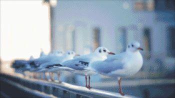 Прокричали чайки музыку печали