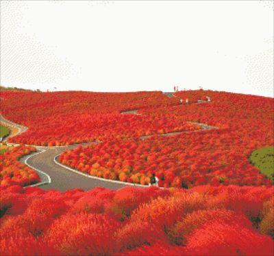 Национальный парк Хитачи осенью